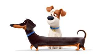 Trenngrafik Pets