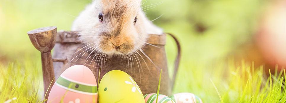 Fototipps zum Osterfest